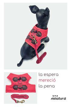 Suave C/ómodo Arnes con Correa para Perros Peque/ño Mascotas Gatos Cachorros Enrejado S D/&D DD Arnes Perro Peque/ño