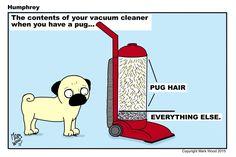 Pug hair everywhere!