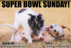 Every Sunday is Supe