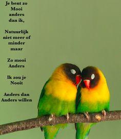 "commonly called ""love-birds"" (agapornis personata) look like the bird manifestation of skittles! Pretty Birds, Beautiful Birds, Animals Beautiful, Cute Animals, Funny Animals, Talking Animals, Pretty Animals, Funny Birds, Wild Animals"