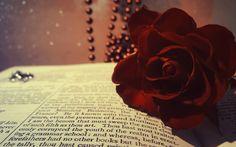 Rose in a book wallpaper, Rose in a book Photography HD desktop wallpaper Shades Of Burgundy, Burgundy Flowers, Burgundy Wine, Red Roses, Red Burgundy, Book Wallpaper, Widescreen Wallpaper, Old Poetry, Ronsard Rose