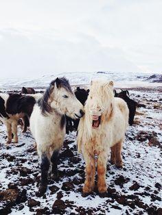 Discover VSCO Grid℠: Horses   blog   VSCO