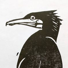One of my  cormorant test prints...I love the way they develop personality and in this case a bit of attitude all by themselves