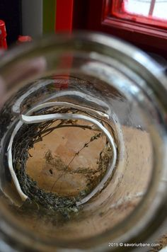 Conopida murata la borcan reteta simpla pentru iarna | Savori Urbane Anastasia, I Love, Canning