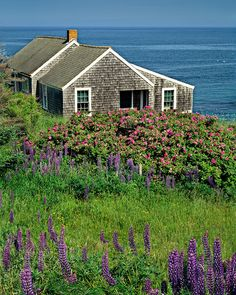 My dream home.Cottage by the Sea, Monhegan Island, Maine @ Ronald Wilson Photography Cozy Cottage, Coastal Cottage, Coastal Homes, Cottage Homes, Maine Cottage, Cape Cod Cottage, Cabins And Cottages, Beach Cottages, Cottages By The Sea