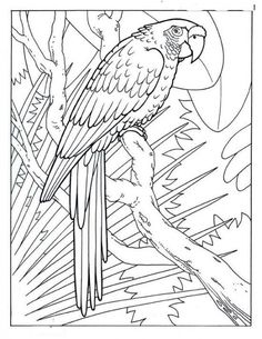 cool coloring pages picture 1 free sample join fb grown up coloring group