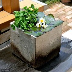 Lovely modern compact container for water garden plants. www.ContainerWaterGardens.net