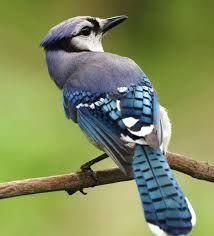Resultado de imagen para bird