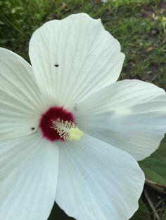 Summer blossoms #flower #summer #garden #newjersey