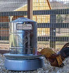 poultry drinker Heated Chicken Waterer, Automatic Chicken Waterer, Poultry, Backyard Chickens