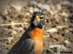 Bird in close up