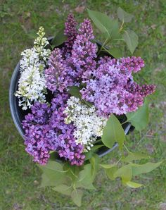 Would love to smell these lilacs
