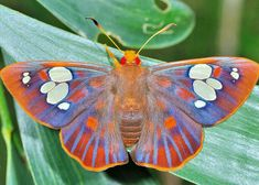 It's a moth, underappreciated and overlooked.
