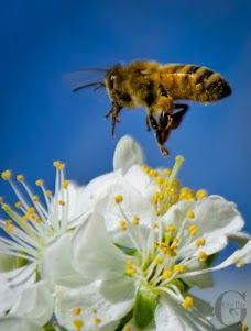 .We need to protect bees