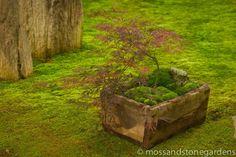 Box Moss Dish Garden  Beautiful!