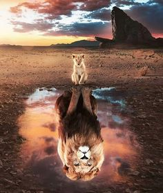 Lion King Poster made out of metal. Inspiring image of The Lion King. Tier Wallpaper, Cute Cat Wallpaper, Cute Disney Wallpaper, Animal Wallpaper, Rainbow Wallpaper, Wallpaper Art, Wallpaper Quotes, Wallpaper Backgrounds, Lion King Animals
