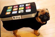 25 fantásticos disfraces de Halloween para perros http://bit.ly/Q9B5YT
