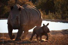 * Rhino Babe * by seVenTone   on 500px