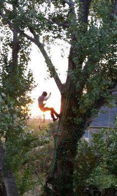 Arborist. Tree climbing. Rivendelltreeexperts.com