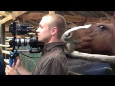 A horse trolls a cameraman during a TV interview - ZooTube