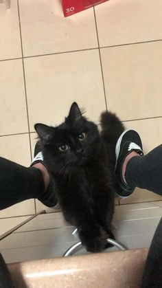 Click The Photo For More Black Cat Photos and clips - Bilder - Katzen Cute Funny Animals, Cute Baby Animals, Animals And Pets, Funny Cats, Cute Cats And Kittens, Baby Cats, Black Kittens, Pretty Cats, Beautiful Cats