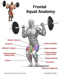 The squat is the best exercise to help burn calories, build strength and help cardio. Squats help muscle growth as well. Bodybuilding Supplements, Bodybuilding Training, Bodybuilding Motivation, Natural Bodybuilding, Muscle Anatomy, Body Anatomy, Squat Workout, Gym Workouts, Squat Exercise