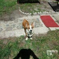 Pet Card Animals Pet Adoption Pets