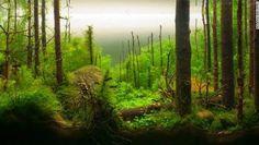Best Aquascape Inpiration 26