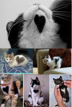 Heart shaped furry critters - I would love to have a cat with a heart on it♥