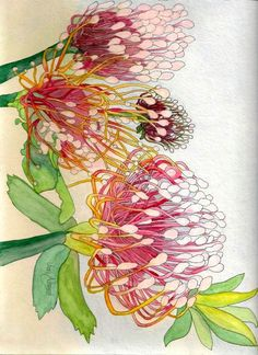 Proteas Botanical Print ~ by Jon Almond