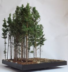 Pine woods 1/35 scale Diorama base by Terence Young