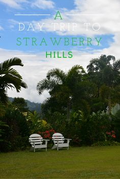 A Day Trip to Strawberry Hills, Jamaica