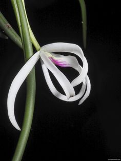 Flowering Plants, Planting Flowers, White Flowers, Beautiful Flowers, Miniature Orchids, Bottle Garden, Terrarium Plants, Miniatures, Gardens