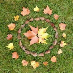 Land art cercles de feuilles