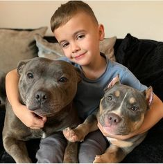 Which Pitbull mix breed is the perfect fit for you and your family? Learn about more than 44 different kinds of Pitbull mixes with facts and pictures. Animals For Kids, Animals And Pets, Cute Animals, Staffy Dog, Cute Dogs And Puppies, Doggies, Pitbull Pictures, Pitbull Terrier, Bull Terriers