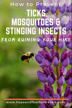 How to Prevent Ticks, Mosquitoes and Stinging Insects from Ruining Your Hike - Hope and Feather Travels