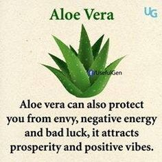 Plants That Attracts Positive Energies!