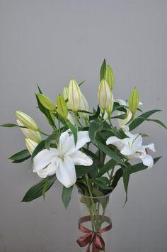 Crini Albi Plants, Horsehair, Planters, Plant, Planting