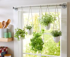 This simple herb hanging idea uses a steel pipe, rope, and glazed planters to make a stunning indoor garden display. This simple herb hanging idea uses a steel pipe, rope, and glazed planters to make a stunning indoor garden display. Culture D'herbes, Hanging Herbs, Indoor Hanging Plants, Indoor Herbs, Hanging Herb Gardens, Hanging Pots, Indoor Plant Decor, Hanging Plant Wall, Window Herb Gardens