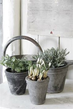 For the Garden - French and Scandinavian furniture, home accessories, Pure and Original paint Scandinavian Furniture, Cottage Living, Garden Accessories, Nordic Style, Growing Plants, Ikebana, Home And Garden, Garden Fun, Amazing Gardens