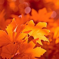The bright oranges and red representing the leaves of autumn
