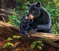 James Meger, artist ~ black bear sow & cub