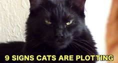 9 Signs Your Cats Are Plotting To Take Over The World