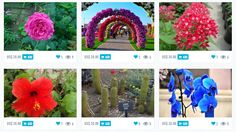 Have a colorful or whimsical summer garden? Flowers, herbs, vegetable? Earn some money by shooting photos and videos of your garden or local garden. Get this: We will pay $10 (US) for every photo or video selected. Watch Scoopshot's Instagram, Pinterest, Facebook and Twitter pages for your fab pics! #ScoopshotGarden
