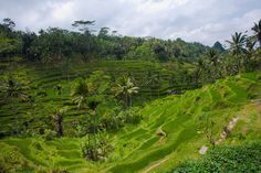 Tegalalang Rice Terrace, Bali | 30 Sights That Will Give You A Serious Case Of Wanderlust