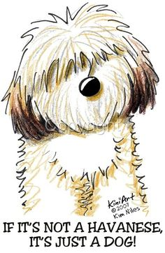 Love my Havanese: for Lynn, Gracie, Emily, and Sean. <3