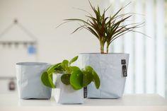 Design & After Perfect Plants, Blue Design, Sri Lanka, Florence, Latex, Planter Pots, Basket, Paper, Florence Italy