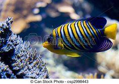 lindos peixes imagens - Pesquisa Google