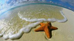 Maldivler'e gittiğinizde dalış yaparak suyun altındaki olağanüstü dünyayı keşfetmenizi tavsiye ederiz. Anı Tur ile keyifli tatiller…