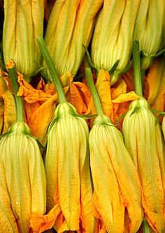 Zucchini flowers: How to choose, store and prepare